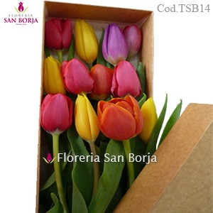 Box with 10 Tulips