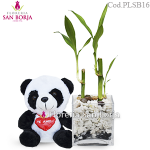 Lucky Bamboo Plant in a glass vase + stuffed panda bear
