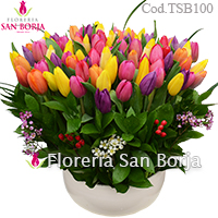 Splendor 100 multicolor tulips