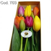 Caja con 6 Tulipanes