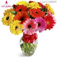 Modelo Colorful Gerbera, 15 gerberas