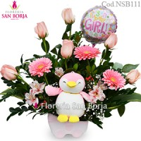 Modelo Little Penguin Niña - 6 rosas