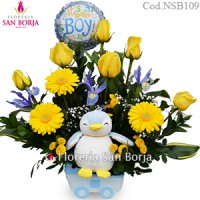 Modelo Little Penguin Niño - 6 rosas