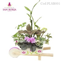 plants for gifts Lima Peru