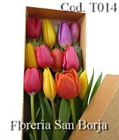 10 boxed tulips lima peru, tulips in a box to Lima, boxed tulips to Lima Peru